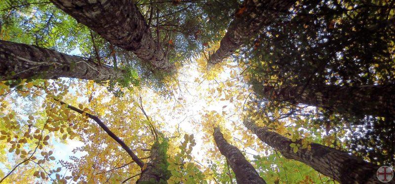Binnenvallend zonlicht in kring van bomen