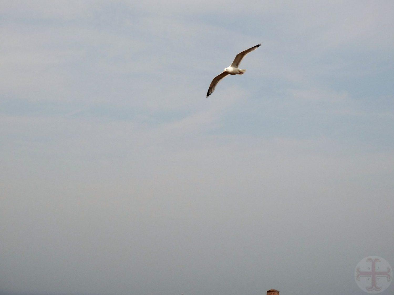 Sfeerbeeld bij bewust denken en luisteren: een meeuw die overvliegt: symbool voor vrij denken