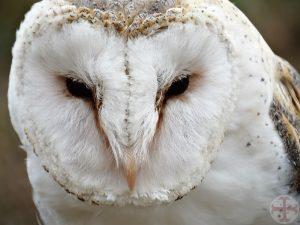 """Bij het artikel Bewust denken en luisteren naar intuïtie en ingevingen zie je een foto van de kop van een """"wijze"""" uil"""