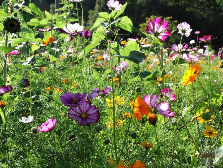 Sfeerbeeld bij bewust denken en waarnemen: allerlei prachtige, gekleurde veldbloemen