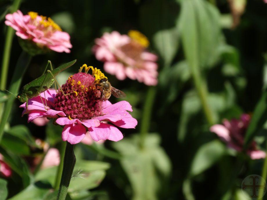 Sfeerbeeld voor Bron van innerlijk geluk: bij en sprinkhaan op bloem kiezen voor je goed voelen