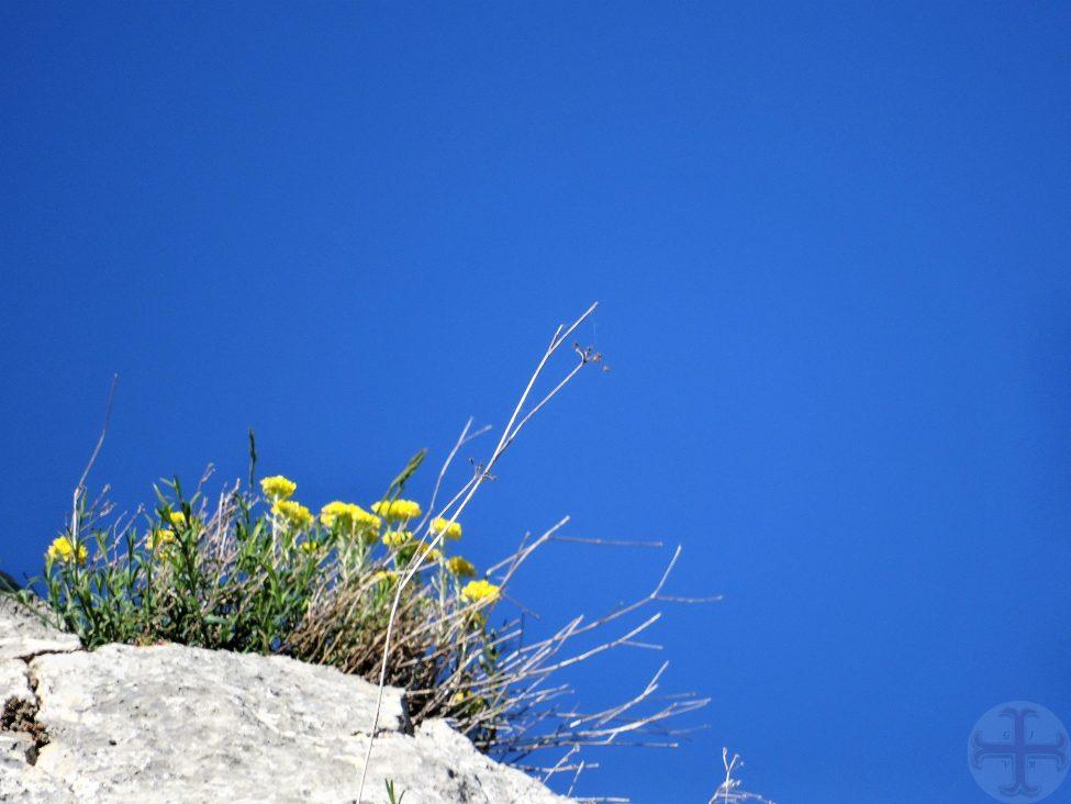 Sfeerbeeld voor je beter voelen: een strakblauwe hemel en gele bloemetjes links onderin beeld