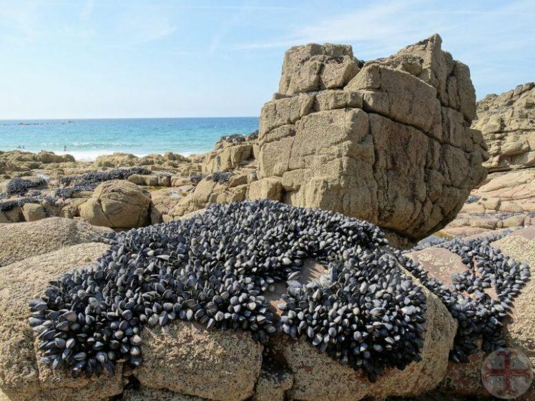 """Afbeelding bij """"Het hier-en-nu"""": rotsen met mosselen op een strand aan zee"""