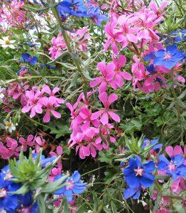 Afbeelding bij Je goed voelen is niet afhankelijk van een ander of je situatie: roze en blauwe bloemetjes