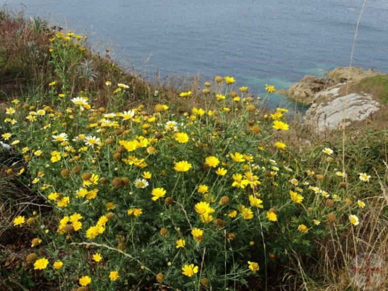 Sfeerbeeld bij mediteren: een zee van bloemen aan zee