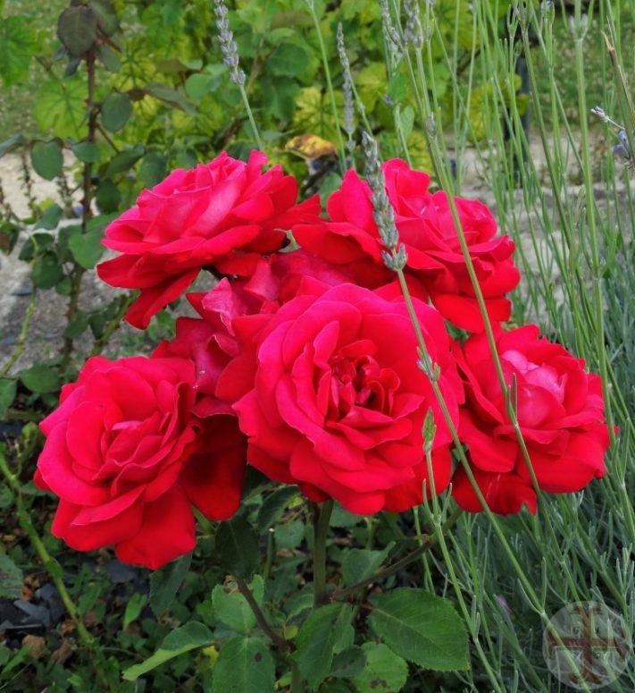 Van jezelf houden: 5 rozen
