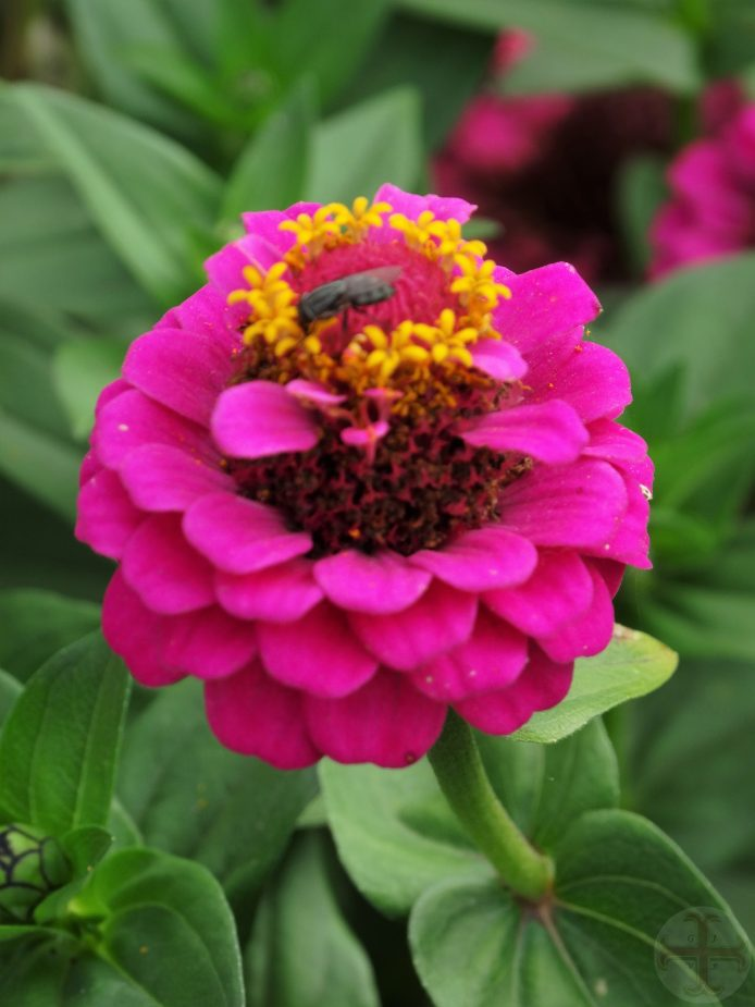 """Sfeerafbeelding van een paarse bloem bij het artikel """"Een goede ademhaling"""""""