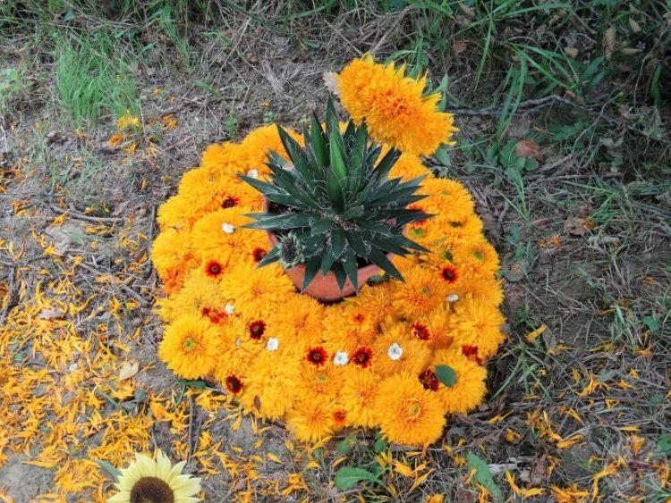 """Afbeelding bij """"Structuur in je leven"""": een cirkel van gele chrysanten (le jardin extraordinaire, Lieurac, FR)"""