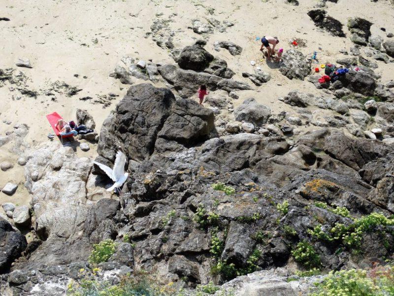 """Afbeelding bij """"Dromen tot doelen maken"""": een meeuw vliegt over een strandje met rotsen"""