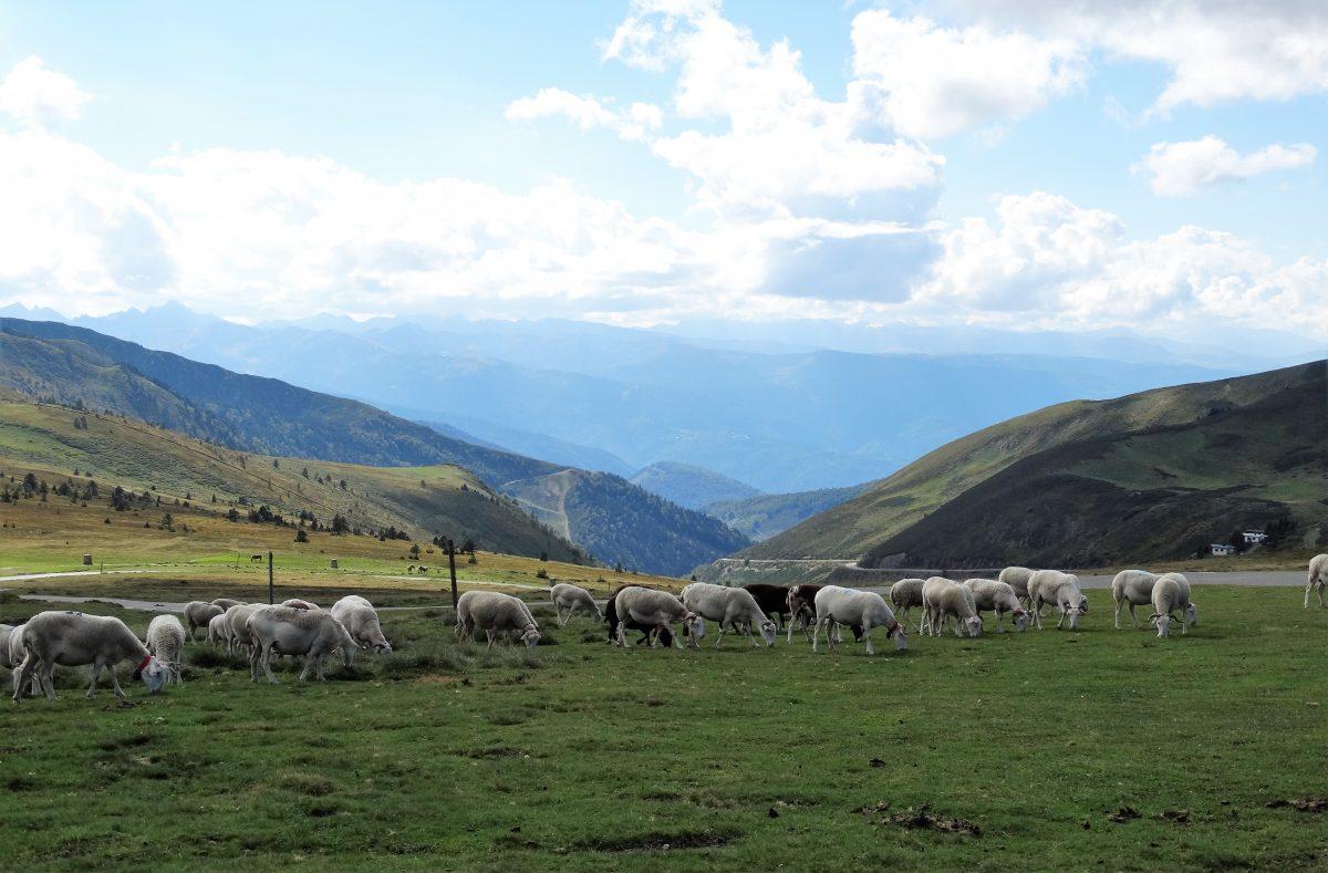 """Afbeelding bij """"Problemen vervangen door oplossingen"""": prachtig landschap met bergen, schapen in een wei en een deels bewolkte lucht"""
