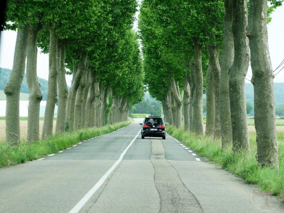 """Foto bij """"Problemen vervangen door oplossingen"""": een auto op de weg met aan beide kanten platanen"""