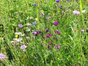 """Afbeelding bij """"Dankbaarheid"""": een bed van veldbloemen"""