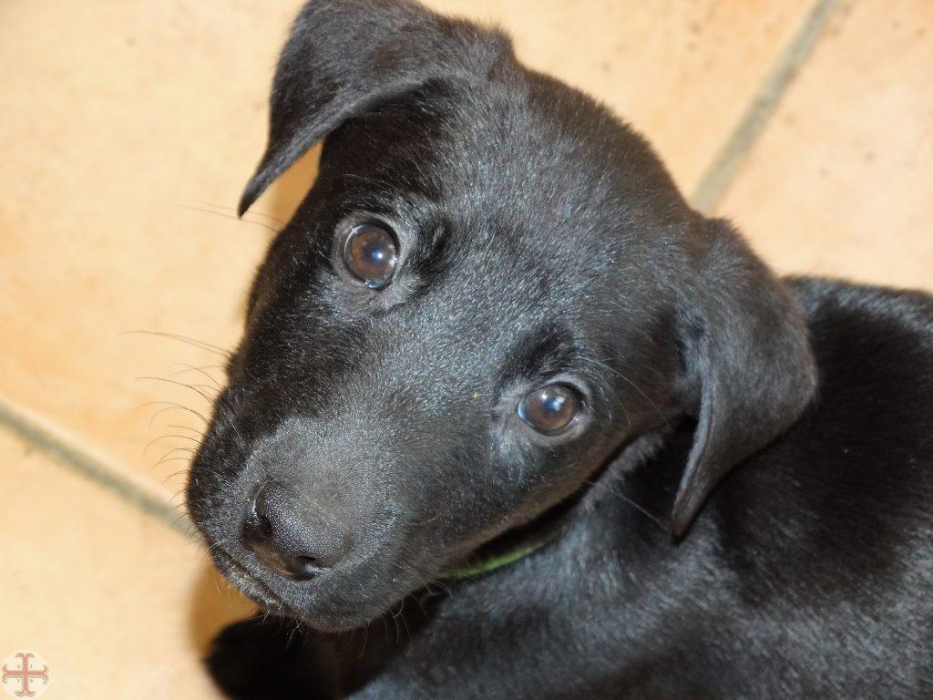 Lief kijkende pup: vooral jonge dieren hebben een helende werking