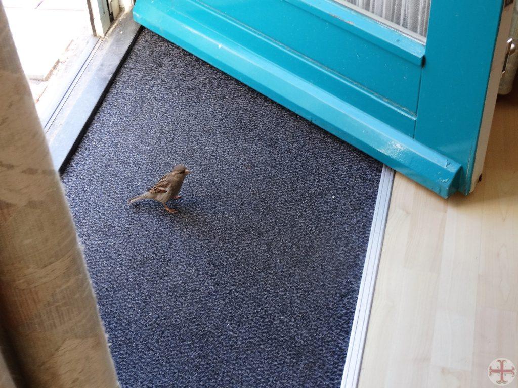 Afbeelding bij geschonden vertrouwen: een musje dat op een mat staat, een deur is open, het is één en al vertrouwen