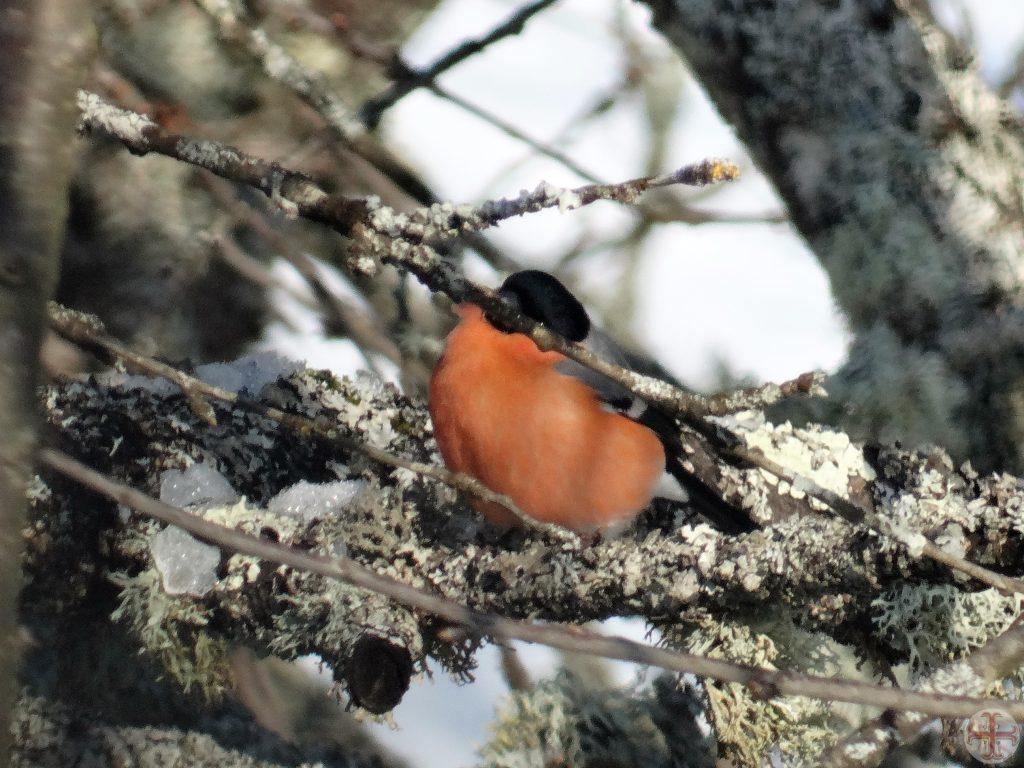 Afbeelding bij Geschonden Vertrouwen: vogeltje dat zich achter takken verschuilt, net zoals een mens zich kan verschuilen nadat zijn vertrouwen is geschonden
