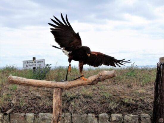 Foto vastgeketende roofvogel die weg wil vliegen: jezelf bevrijden van de ketenen van jaloezie